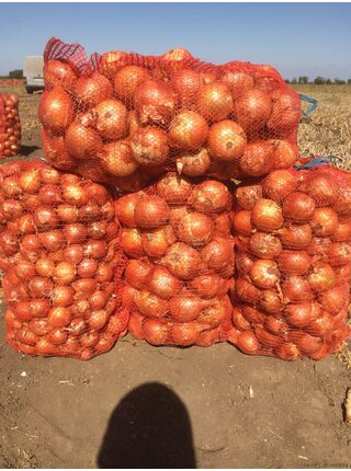 Sonya New (CRX 2314 f1) семена лука желтого Cora Seed, оригинальная упаковка (250000 семян)