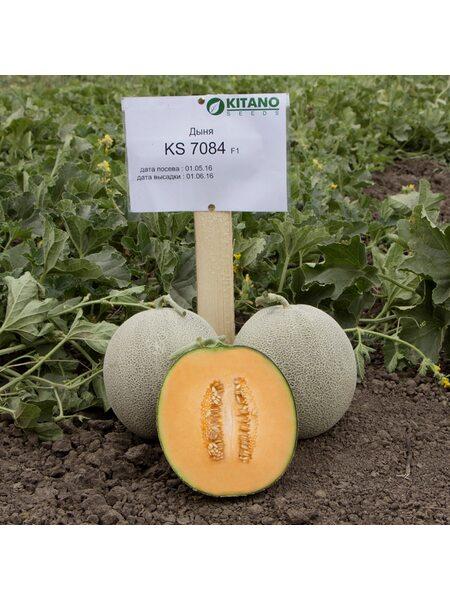 KS 7084 F1 - Семена Дыни, Kitano 100 семян.