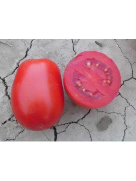 Leonerosso F1 - Семена детерминантного томата, Cora Seeds, 1000 семян
