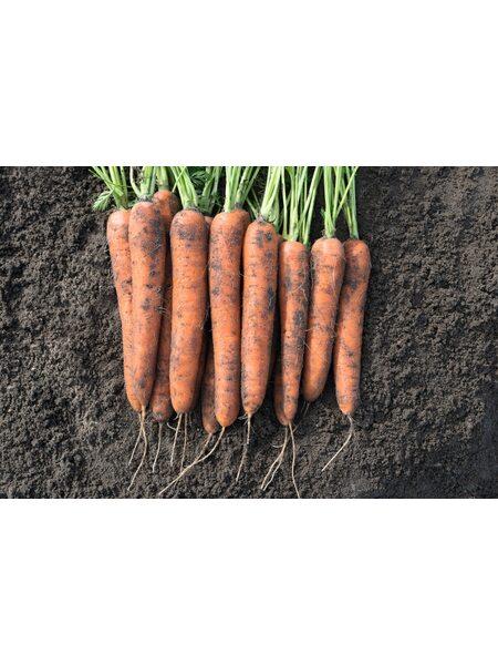 Норвей F1/ Norway F1 (2,2-2,4 мм) - Семена моркови BEJO, 1 млн. семян