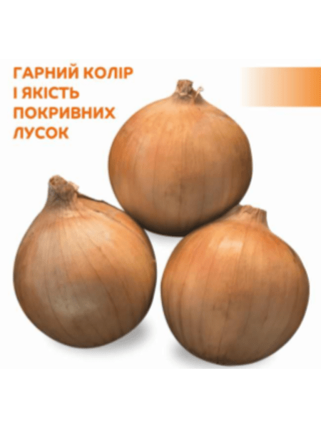 Reflex F1 - Семена лука озимого, Cora Seeds, 250 000 семян