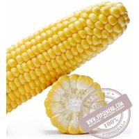 Мирус F1 - Семена суперсладкой кукурузы от фирмы Royal Sluise упаковка 5000 семян