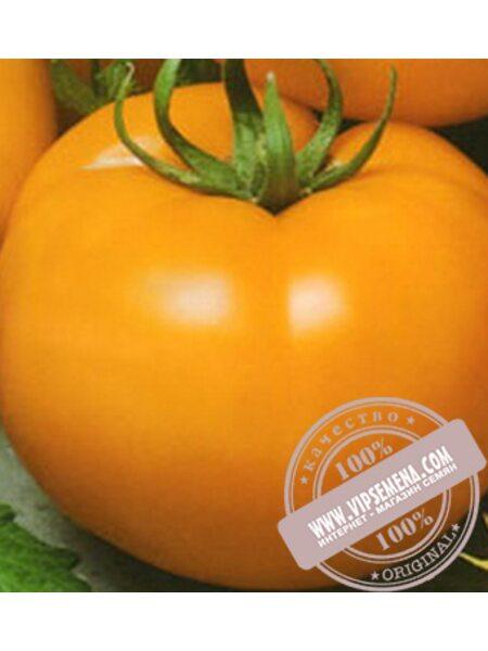 KS 10 F1 семена томата индетерминантного Kitano Seeds, оригинальная упаковка (100 семян)