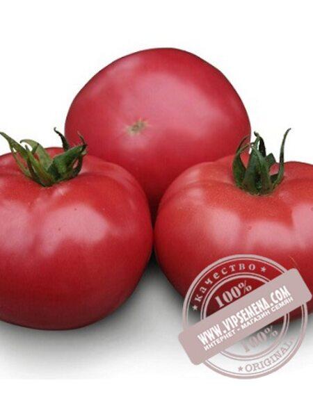 KS 38 F1 семена томата индетерминантного Kitano Seeds, оригинальная упаковка (100 семян)
