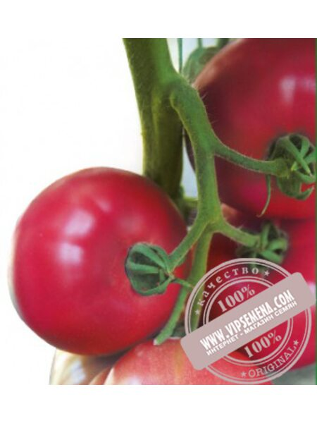 Батлер F1 (Batler F1) семена томата индетерминантного Kitano Seeds, оригинальная упаковка (100 семян)