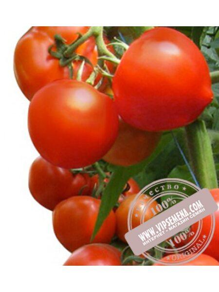 Хитомакс F1 (Hitomax F1) семена томата индетерминантного Kitano Seeds, оригинальная упаковка (100 семян)