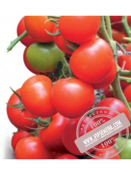 Тайлер F1 (Tayler F1) семена томата индетерминантного Kitano Seeds, оригинальная упаковка (100 семян)