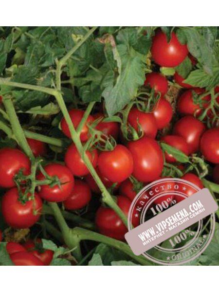 8504 F1 семена томата детерминантного Lark Seeds, оригинальная упаковка (500 семян)