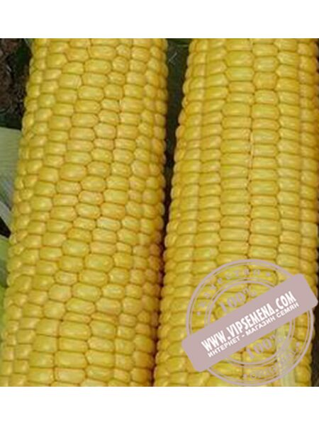 Добрыня F1 (Dobrуnjа F1) семена кукурузы сахарной Lark Seeds, оригинальная упаковка (2500 семян)