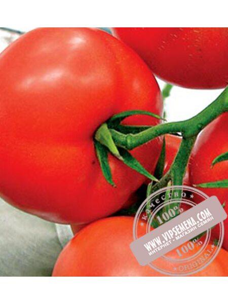 Мобил (Mobil) семена томата детерминантного Lark Seeds, оригинальная упаковка (250 гр.)