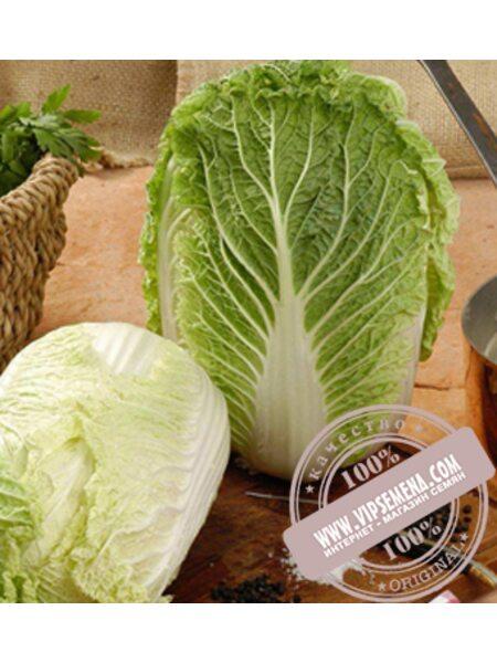Ричи F1 (Richi F1) семена капусты пекинской Sakata, оригинальная упаковка (1000 семян)