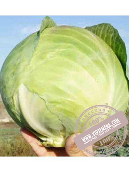 Коронет F1 (Koronet F1) семена капусты белокочанной Sakata, оригинальная упаковка (1000 семян)