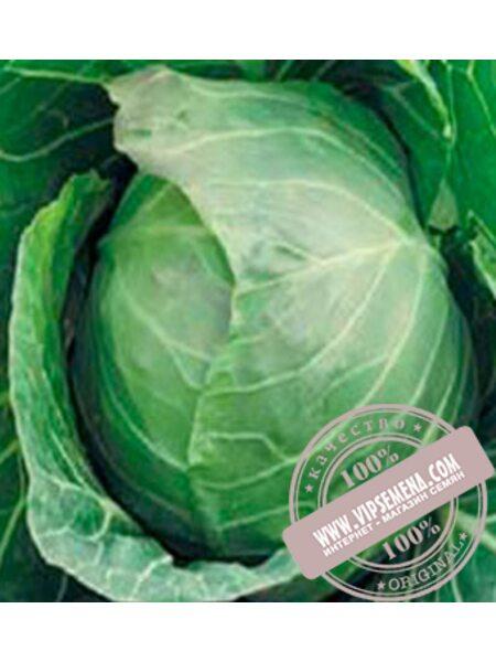 Кевин F1 (Kevin F1) семена капусты белокочанной ультраранней Syngenta, оригинальная упаковка (2500 семян)