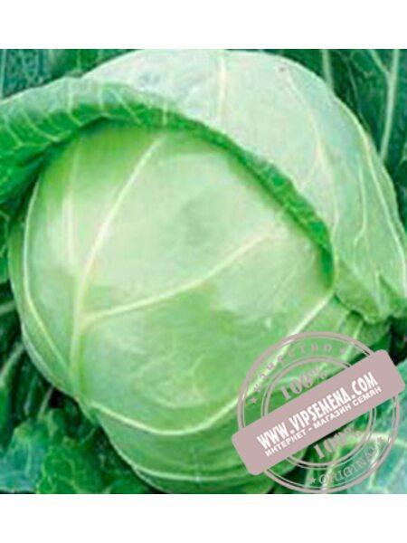 Миррор F1 (Mirror F1) семена капусты белокочанной ультраранней Syngenta, оригинальная упаковка (2500 семян)