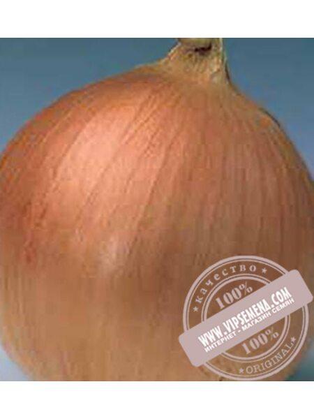 Банко (Banko) семена лука репчатого Syngenta, оригинальная упаковка (250000 семян)