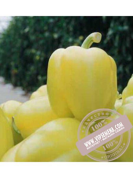 Блонди F1 (Blondi F1) семена перца сладкого Syngenta, оригинальная упаковка (500 семян)