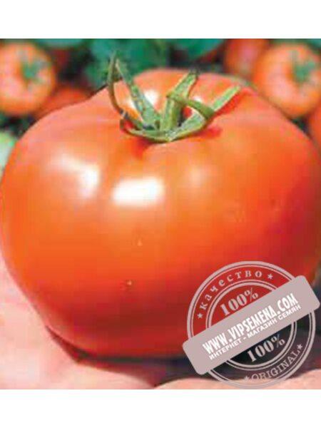 Бобкат F1 (Bobkat F1) семена томата детерминантного Syngenta, оригинальная упаковка (2500 семян)