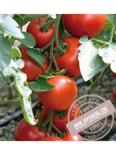 Бодерин F1 (Boderin F1) семена томата индетерминантного Syngenta, оригинальная упаковка (500 семян)