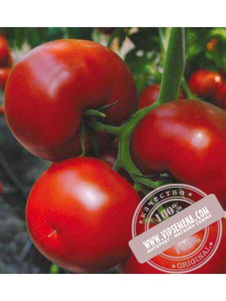 Бостина F1 (Bostina F1) семена томата индетерминантного Syngenta, оригинальная упаковка (500 семян)