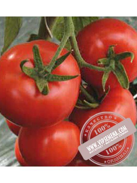 Ивет F1 (Ivet F1) семена томата полудетерминантного Syngenta, оригинальная упаковка (500 семян)