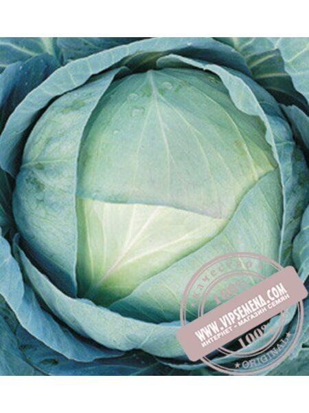 Агрессор F1 (Agressor F1) семена капусты белокочанной среднепоздней Syngenta, оригинальная упаковка (2500 семян)