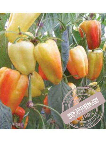 Барби F1 (Barbi F1) семена перца сладкого Syngenta, оригинальная упаковка (500 семян)