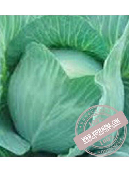 Блоктор F1 (Bloktor F1) семена капусты белокочанной поздней Syngenta, оригинальная упаковка (2500 семян)