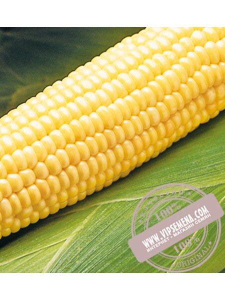 Бостон F1 (Boston F1) семена кукурузы сладкой Syngenta, оригинальная упаковка (1 кг.)