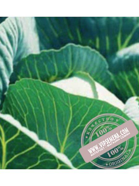 Куизор F1 (Quisor F1) семена капусты белокочанной среднеспелой Syngenta, оригинальная упаковка (2500 семян)
