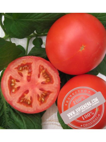 Дантина F1 (Dantina F1) семена томата индетерминантного Syngenta, оригинальная упаковка (500 семян)