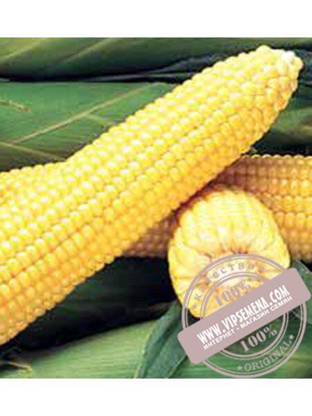 Джубили F1 (DZHUBILI F1) семена кукурузы сладкой Syngenta, оригинальная упаковка (100000 семян)