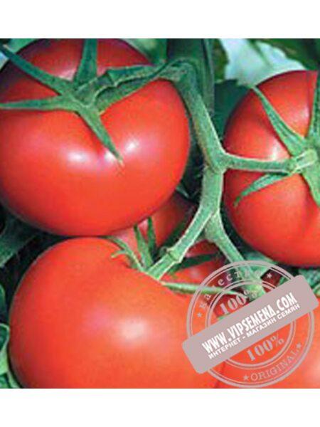 Фантастина F1 (Fantastina F1) семена томата индетерминантного Syngenta, оригинальная упаковка (500 семян)