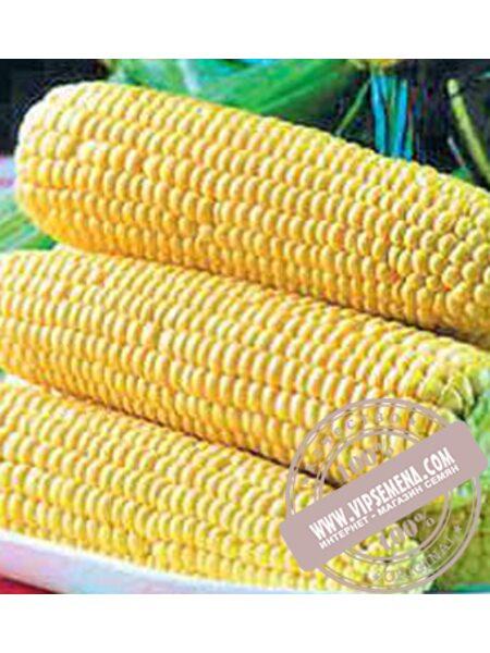 Спирит Ф1  (Spirit F1) семена кукурузы сладкой Syngenta, оригинальная упаковка (1 кг.)