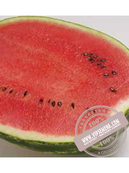 Топ Ган F1 (Top Gan F1) семена арбуза Syngenta, оригинальная упаковка (1000 семян)