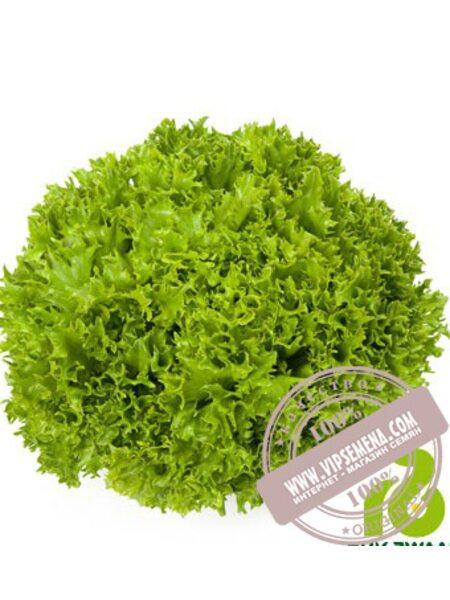 Листовой салат открытый грунт