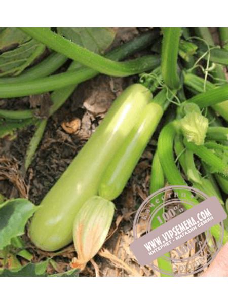 Аделия F1 (Adeliya F1) семена кабачка Enza Zaden, оригинальная упаковка (500 семян)