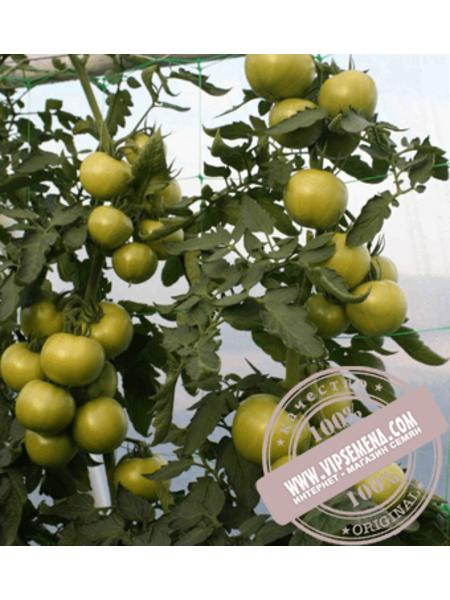 Афамия F1 (AfamiaF1) семена томата индетерминантного для пленочных теплиц Enza Zaden, оригинальная упаковка (250 семян) АКЦИЯ