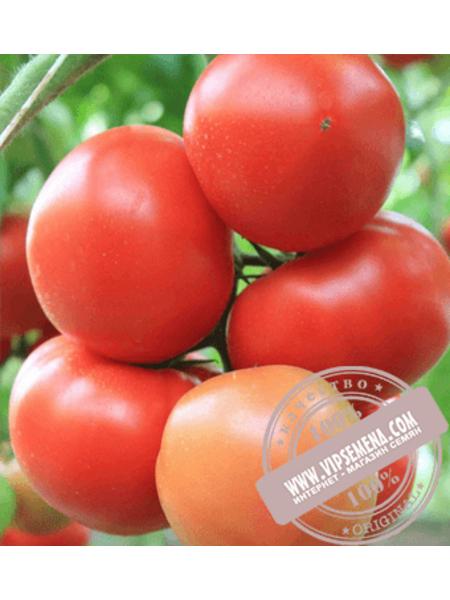 Агилис F1 (Agilis F1) семена томата индетерминантного для пленочных теплиц Enza Zaden, оригинальная упаковка (500 семян)