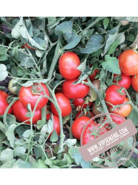 Айваз 331 F1 (Ajvaz 331 F1) семена томата детерминантного Enza Zaden, оригинальная упаковка (1000 семян)