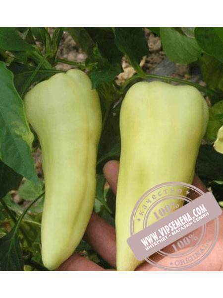 Аккорд F1 (Akkord F1) семена сладкого перца угорского типа Hazera, оригинальная упаковка (1000 семян)