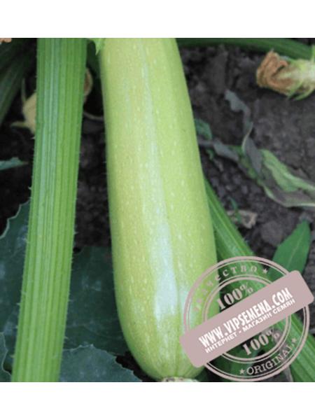 Ардендо 174 F1 (Ardendo F1) семена кабачка Enza Zaden, оригинальная упаковка (500 семян)