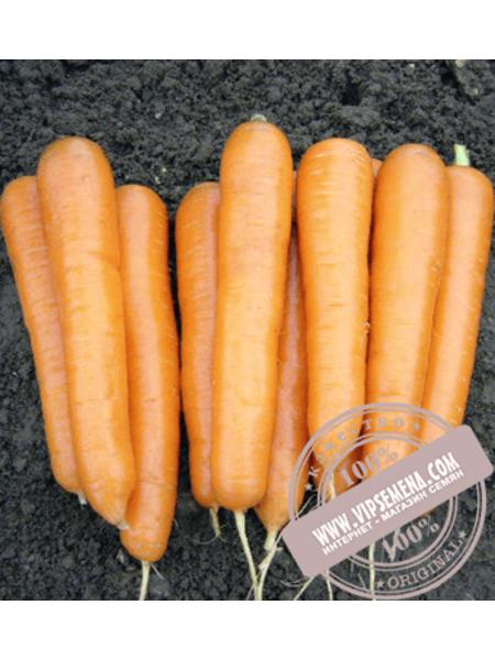 Аттилио F1 (Attilio F1) семена моркови Нантского типа Vilmorin, оригинальная упаковка (100000 семян VD)