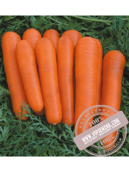 Аттилио F1 (Attilio F1) семена моркови Нантского типа Vilmorin, оригинальная упаковка (100000 семян)