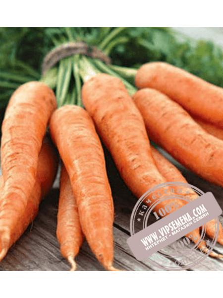 Аурантина F1 (Aurantina F1) семена моркови типа Нантес Takii Seeds, оригинальная упаковка (100000 семян)