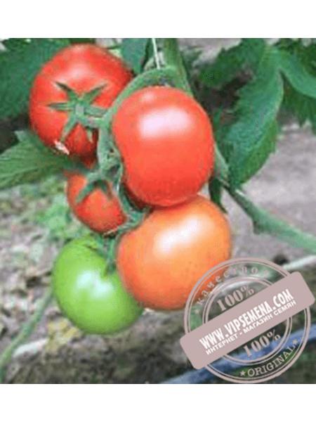 Байконур F1 (Baikonur F1) семена томата индетерминантного для пленочных теплиц Enza Zaden, оригинальная упаковка (500 семян)