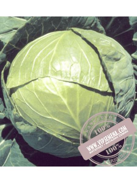 Бaлбро F1 (Balbro F1) семена капусты белокочанной Hazera, оригинальная упаковка (2500 семян калиброваные)