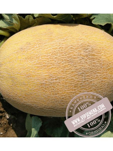 Бизан F1 (Bizan F1) семена дыни типа Ананас Enza Zaden, оригинальная упаковка (500 семян)