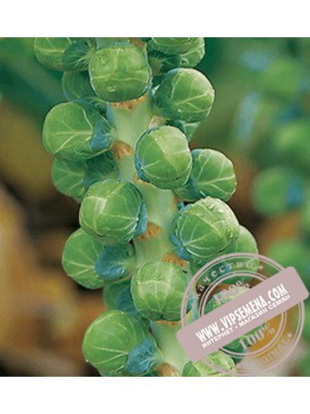 Бриллиант F1 (Brilliant F1) семена капусты брюссельской Hazera, оригинальная упаковка (2500 семян)