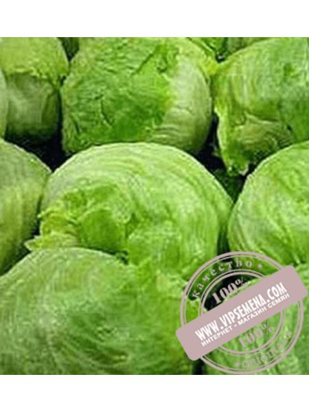 Даймонд (Daуmond) семена салата типа Айсберг Enza Zaden,оригинальная упаковка (5000 семян)