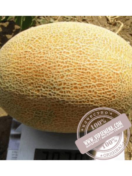 Дакаро F1 (Dacaro F1) семена дыни типа Ананас Enza Zaden, оригинальная упаковка (500 семян)